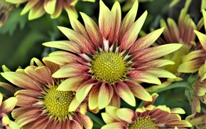 Picture flowers, petals, yellow-brown
