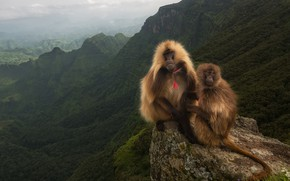 Picture mountains, rock, valley, Monkeys, Baboons