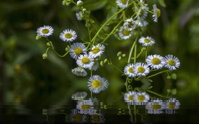 Picture water, light, flowers, reflection, photoshop, white, green background, bokeh, composition, Daisy