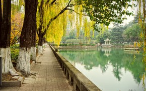 Picture autumn, trees, pond, Park, China, China, Chengdu, Chengdu, Sichuan Province