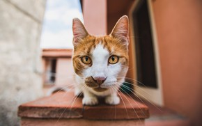 Picture cat, cat, look, face, bench, house, background, street, wall, Board, portrait, red, view, Tomcat, Kote, …