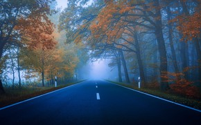 Picture road, autumn, forest, trees, fog, Park, blue, markup, branch, foliage, dal, highway, haze, twilight, early …