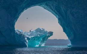 Picture sea, nature, the ocean, bird, ice, iceberg