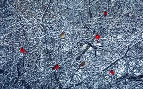 Picture winter, birds, tree