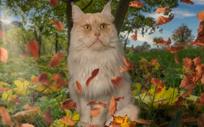 Picture autumn, cat, the sky, grass, cat, look, leaves, trees, nature, collage, foliage, photoshop, fluffy, red, …