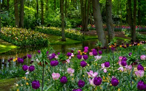 Picture greens, trees, flowers, pond, Park, spring, purple, tulips, pink, Netherlands, bokeh, Keukenhof Gardens