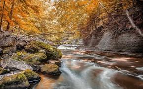 Picture autumn, forest, stream