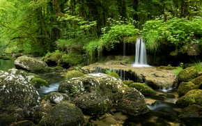 Picture greens, forest, summer, grass, stones, vegetation, waterfall, stream, boulders
