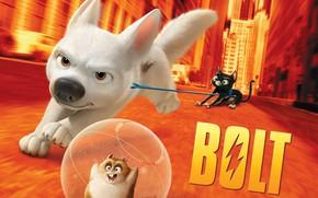 Picture cat, dog, hamster, Volt, Bolt