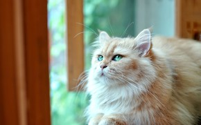 Picture cat, cat, look, light, pose, window, red, sill, face, green eyes