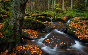 Picture autumn, forest, leaves, trees, stream, stones, the bushes
