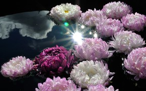 Picture water, the sun, clouds, rays, light, flowers, glare, reflection, the dark background, petals, pink, white, …