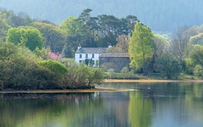 Picture forest, the sun, trees, fog, lake, shore, England, home, morning, Lake District