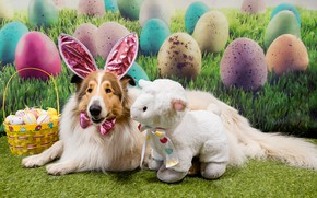 Picture holiday, toy, dog, Easter