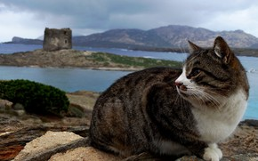 Picture cat, cat, look, face, landscape, mountains, nature, pose, grey, shore, tower, ruins, sitting, striped, pond