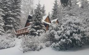 Picture Nature, Winter, Snow, Nature, Winter, Snow, Snow trees, Снежные деревья, Winter house, Зимний дом