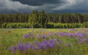 Picture field, forest, summer, flowers, clouds, meadow, storm, gloomy sky