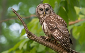 Picture greens, look, owl, bird, foliage, green background, bitches, bokeh, owl