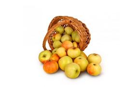 Picture apples, harvest, basket