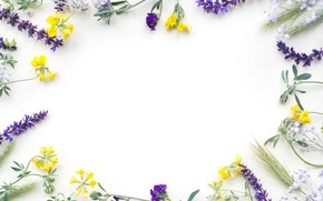 Picture flowers, field, yellow, flowers, purple, frame