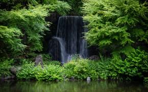 Picture forest, waterfall, Japan, Экспо Мемориальный Парк