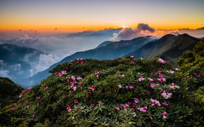 Wallpaper greens, the sky, leaves, the sun, clouds, rays, landscape, flowers, mountains, nature, fog, dawn, hills, ...