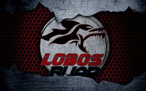 Picture wallpaper, sport, logo, football, Lobos BUAP