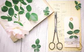 Picture rose, book, scissors