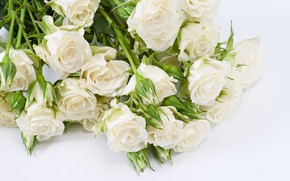 Picture flowers, roses, bouquet, buds, white roses