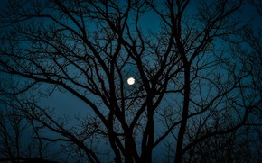 Picture the sky, trees, night, nature, the moon