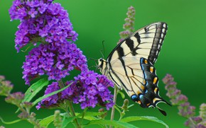 Picture flower, photo, butterfly