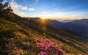 Picture forest, summer, leaves, the sun, clouds, rays, sunset, flowers, mountains, nature, blue, dawn, hills, slope, …