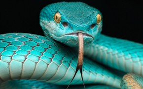 Picture LANGUAGE, FACE, HEAD, EYES, SNAKE, SCALES