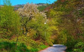 Picture Road, Spring, Trees, Spring, Flowering, Road, Trees, Flowering