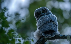 Picture look, owl, bird, foliage, branch, bokeh