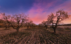 Picture spring, garden, Apple