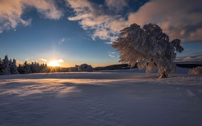 Picture winter, field, forest, the sky, the sun, clouds, rays, snow, trees, nature, dawn