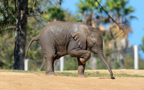 Picture leaves, branches, nature, pose, background, tree, elephant, walk, cub, trunk, elephant, bokeh, elephant, elephant