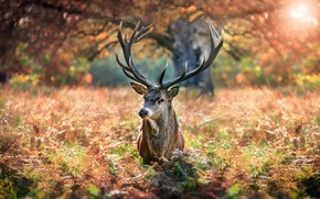 Picture autumn, nature, tree, animal, deer, grass