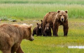Picture glade, bear, bears, kids, bears, bear