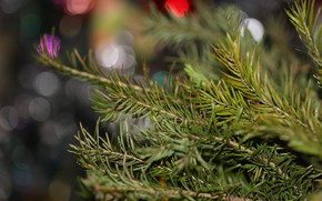 Picture background, tree, bokeh