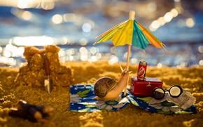 Picture sand, sea, beach, water, macro, light, umbrella, stay, shore, heat, snail, umbrella, glasses, newspaper, resort, …