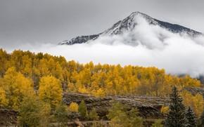 Picture autumn, forest, landscape, mountains