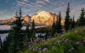 Picture forest, the sky, flowers, mountains, ate, slope, USA, national Park, Mount Rainier