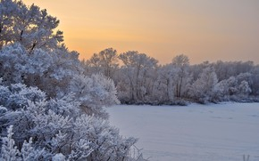 Picture winter, frost, snow, trees, landscape, sunset, nature, the evening, the bushes