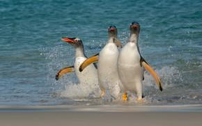 Picture sea, beach, birds, shore, penguins