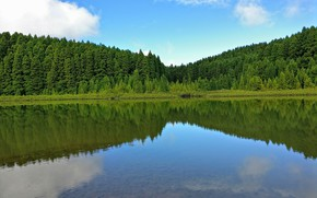 Picture forest, the sky, trees, lake, reflection