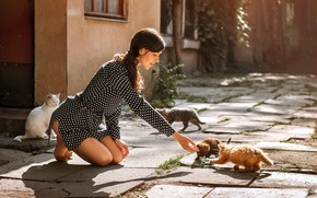 Picture look, girl, the sun, happiness, pose, kitty, dress, Dima Begma