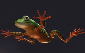 Picture animals, frog, art, Alessandro Mastronardi, Amazon tree frog: tiger stripes color variation