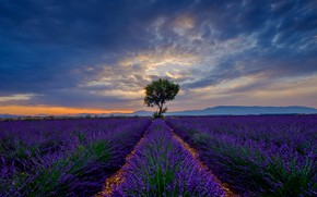 Picture summer, the sky, clouds, flowers, blue, tree, hills, the evening, haze, tree, the ranks, lavender, …